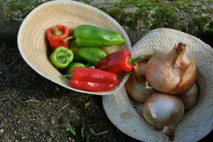 Imaxe de recolecta de pementos e cebolas